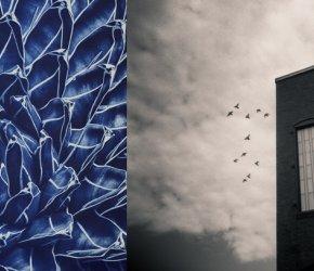 Light Sensitive 2017 - Celebrating Images from the Darkroom