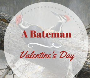 Lovebirds – The Amorous Life of Birds with Robert Bateman