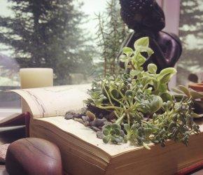 Book Terrarium