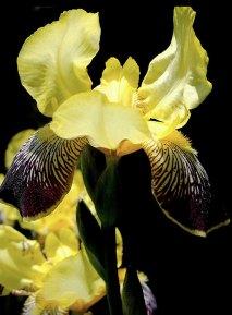 Flower Photo One