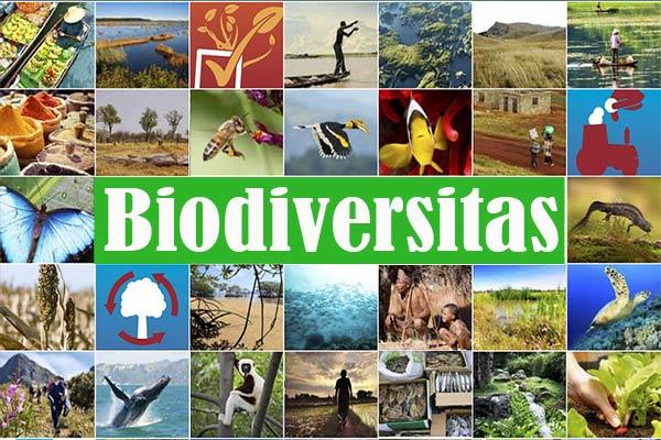 Biodiversitas Indonesia