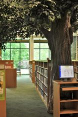 Trees INSIDE the library!