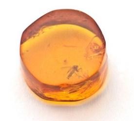 Morceau d'ambre jaune avec inclusion d'un insecte fossilisé