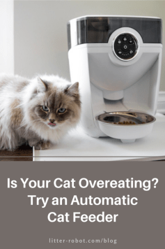 white Siberian cat next to automatic cat feeder - is your cat overeating?