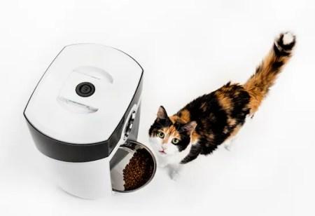 Gato calicó mirando hacia arriba desde un comedero automático para gatos blanco Robot-alimentador con croquetas: ¿por qué los gatos intentan enterrar su comida?