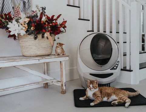 Orange tabby cat lying on a litter mat in front of a beige Litter-Robot 3 Connect next to a bench with an orange tabby kitten and basket of flowers