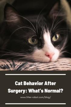Tuxedo cat face - cat behavior after surgery: what's normal?