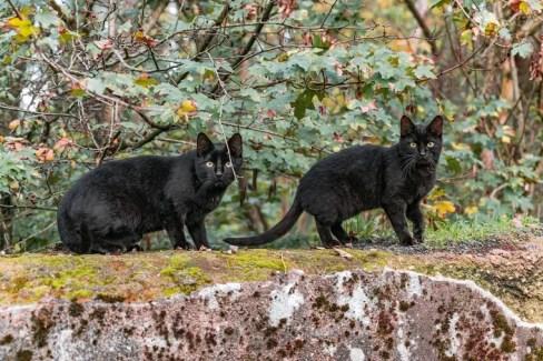 Two black cats on a forest ledge - cat coat genetics