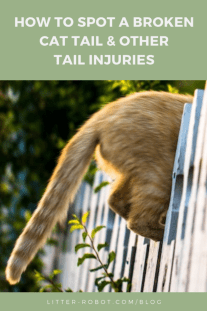 orange tabby cat backside and tail crouched on a fence - how to spot a broken cat tail and other common cat tail injuries
