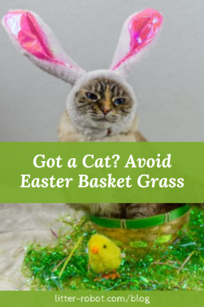 Cat dressed in bunny ears sitting in a basket next to Easter basket grass - got a cat? avoid Easter basket grass