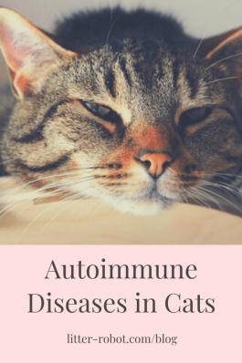 Brown tabby cat sleepy - autoimmune diseases in cats