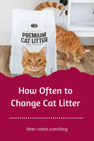 orange tabby cat with a bag of Litterbox.com cat litter- how often to change cat litter