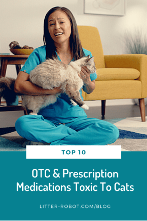 Dr. Justine Lee veterinarian holding long-haired cat - top 10 over-the-counter and prescription medications toxic to cats