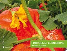Potirons et cornichons potager