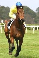 Little Acorns Low Liability Laying System  Image of horseandjockey