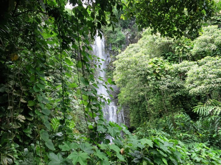 ONE OF MANY WATERFALLS ON ROAD TO HANA
