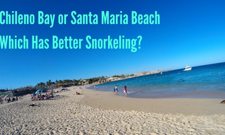 What is the best beach for snorkeling in Cabo? Chose the best beach in Cabo for snorkeling after reading this post.