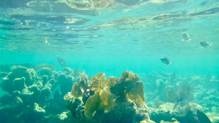 Snorkel in Roatan! #1 of 7 Things To Do In Roatan featured on the Roatan Blog!