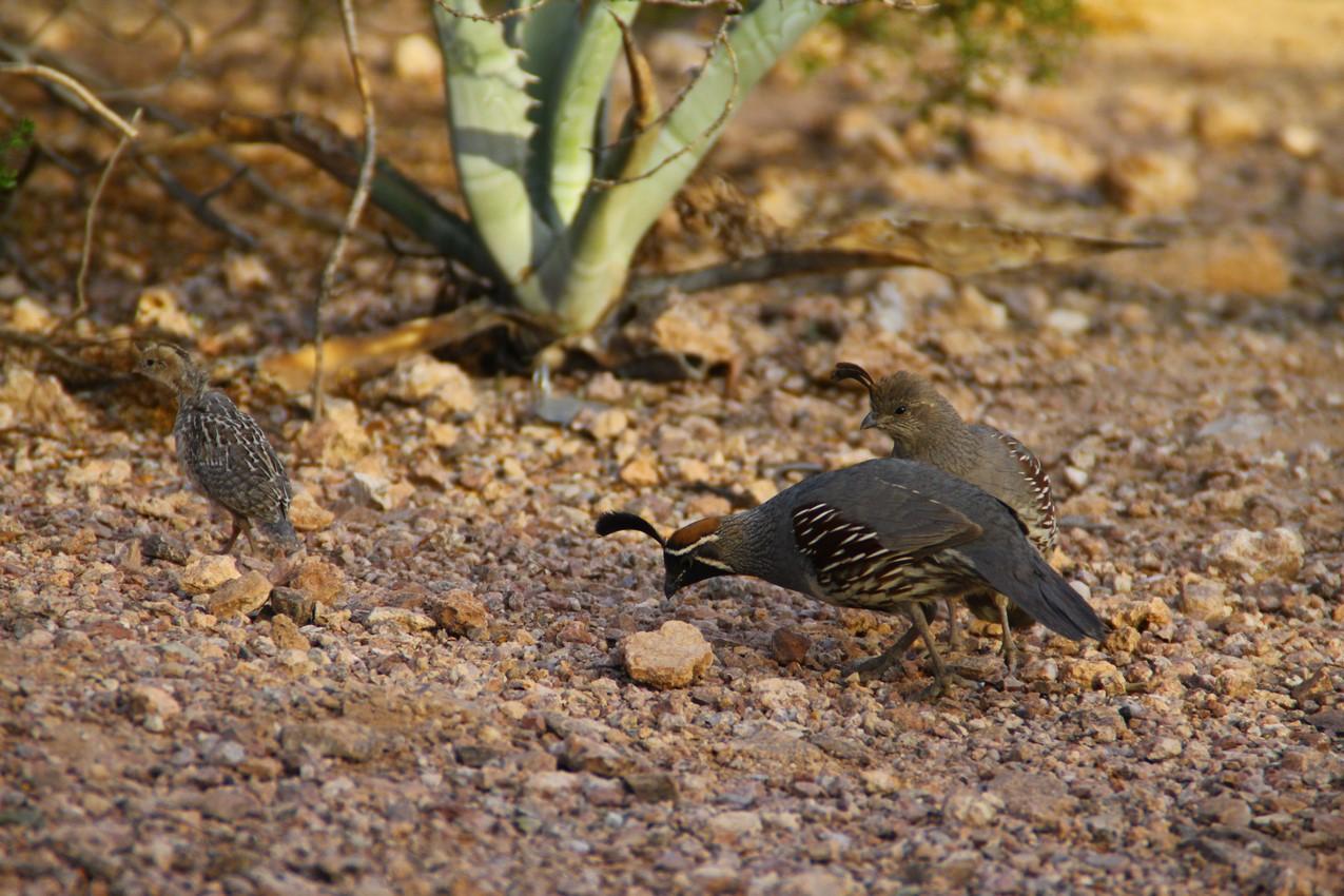 birds at botanical