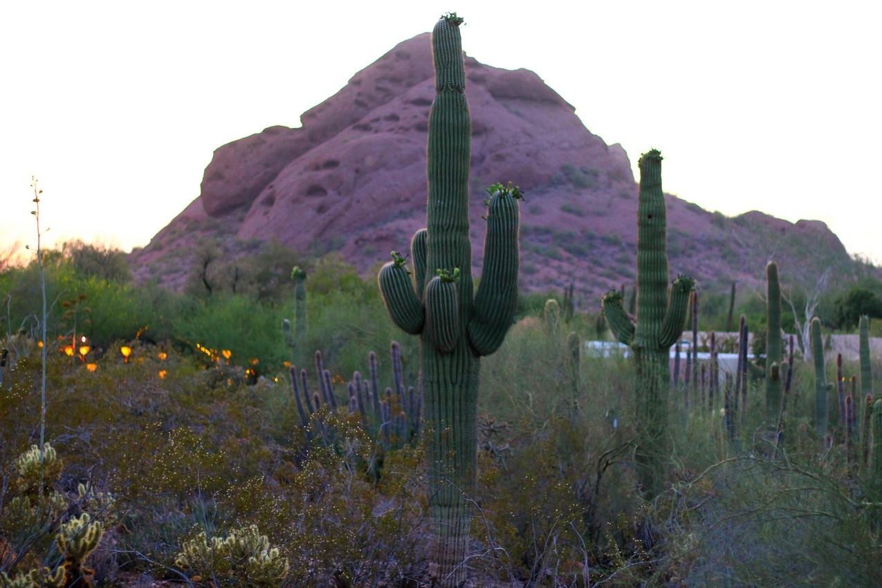 cacti at botanical