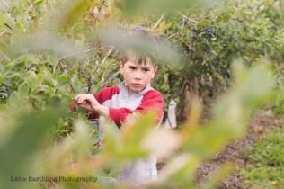 blueberry-picking-2232