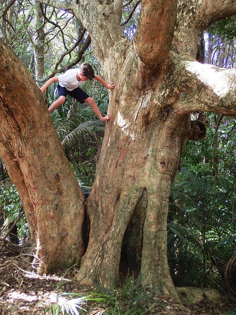Apollo climbing trees in New Zealand.