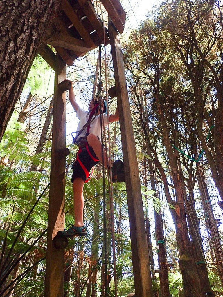 Apollo at Adventure Forest in Whangarei.