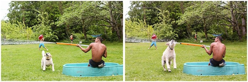 Frodo the labradoodle and mordecai having a water fight.