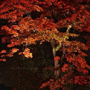 弘前城公園_Hirosaki Castle Park