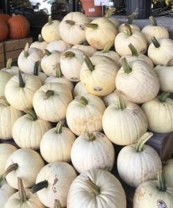 Pumpkin-display