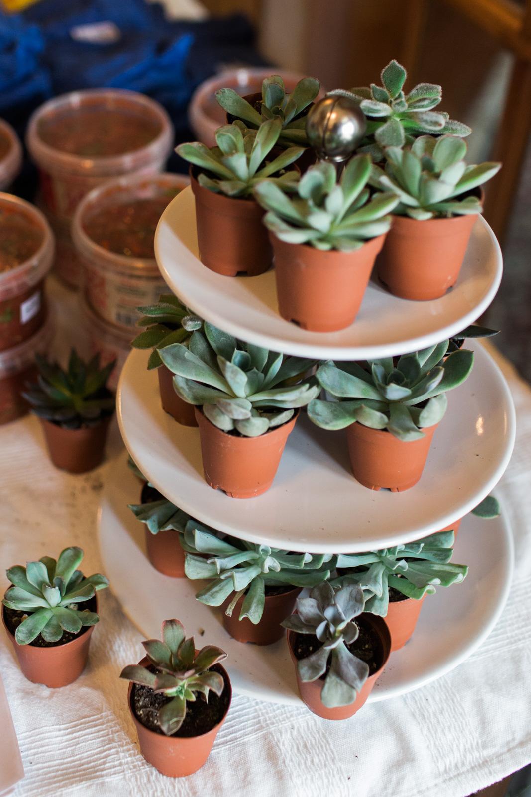 columbus-blogger-sunday-funday-event-stump-plants-9