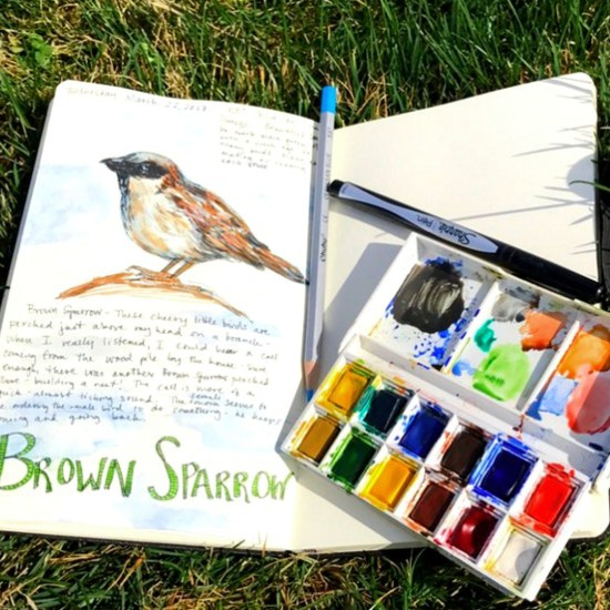 Such a cute sketch from a nature journal by Hannah Stevenson.