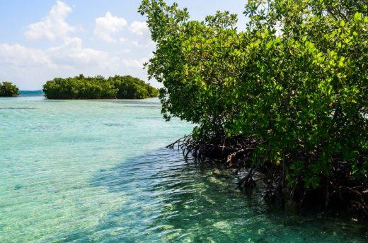 www.littlegreenbee.be mangrove guadeloupe