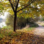 Mes coups de coeur d'automne