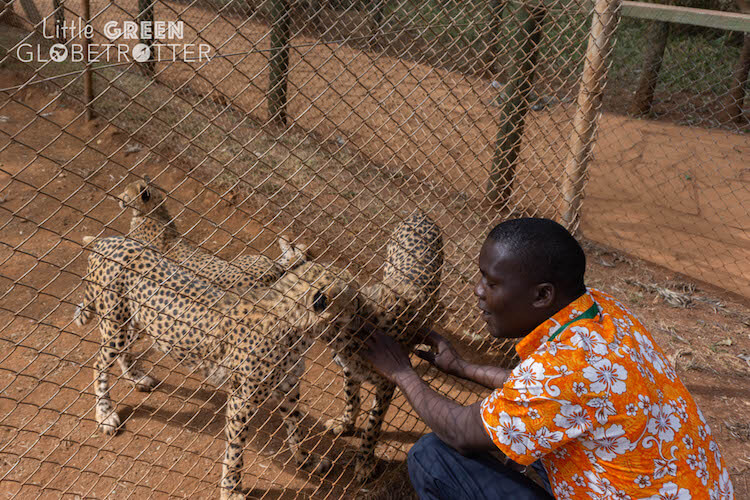 Animal-Orphanage-guide-keeper-Nairobi-Kenya