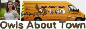Owls about town banner