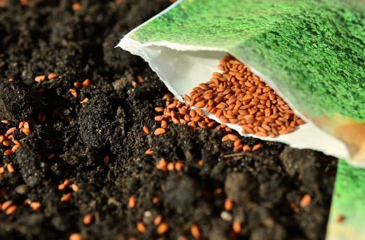 An open seed packet, laying in a patch of compost with seeds spilling out. Ordering your seed now is a great way to prepare for gardening season.