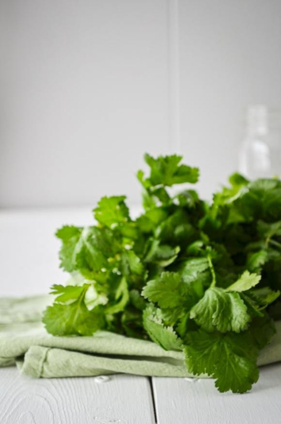 A bundle of cilantro, resting on a cloth napkin and white background.