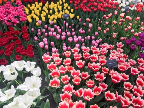 Spring Flowers Amsterdam Holland Keukenhof