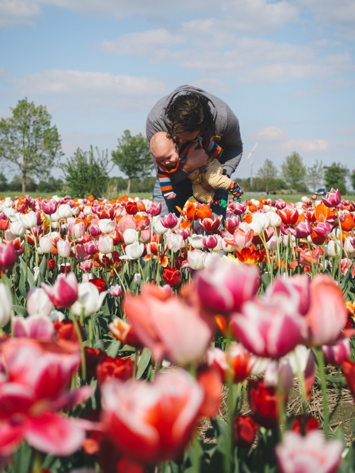 Tulip fields Holland Spring