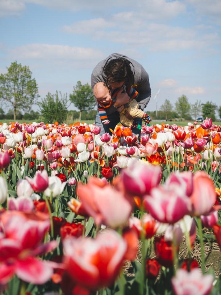 Tulip fields Holland Spring