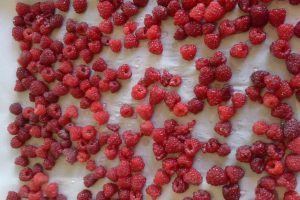 Raspberries on a cookie sheet covered with waxed paper
