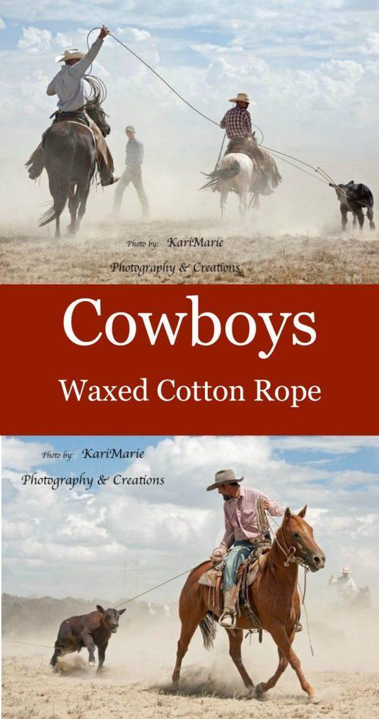 """Cowboys waxed cotton rope"" Cowboys riding horses roping calves for branding"