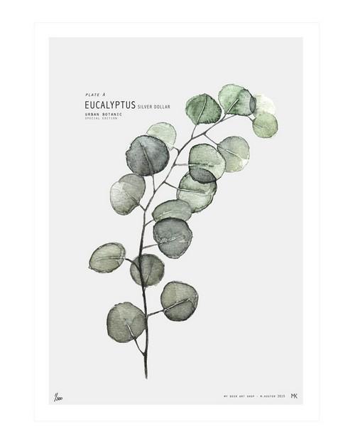 eucalyptus_1024x1024