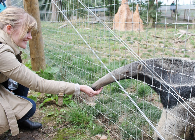 Katy feeding the anteater