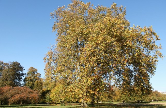 Hyde Park London Autumn