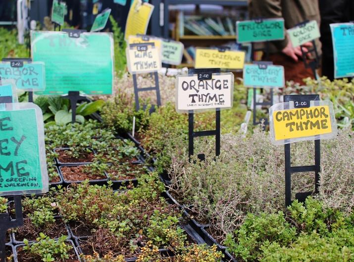 Dalston Food Market (14)