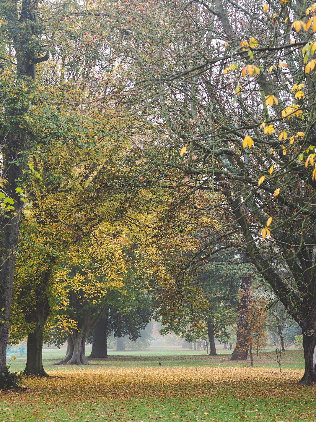 autumn leaves kew gardens