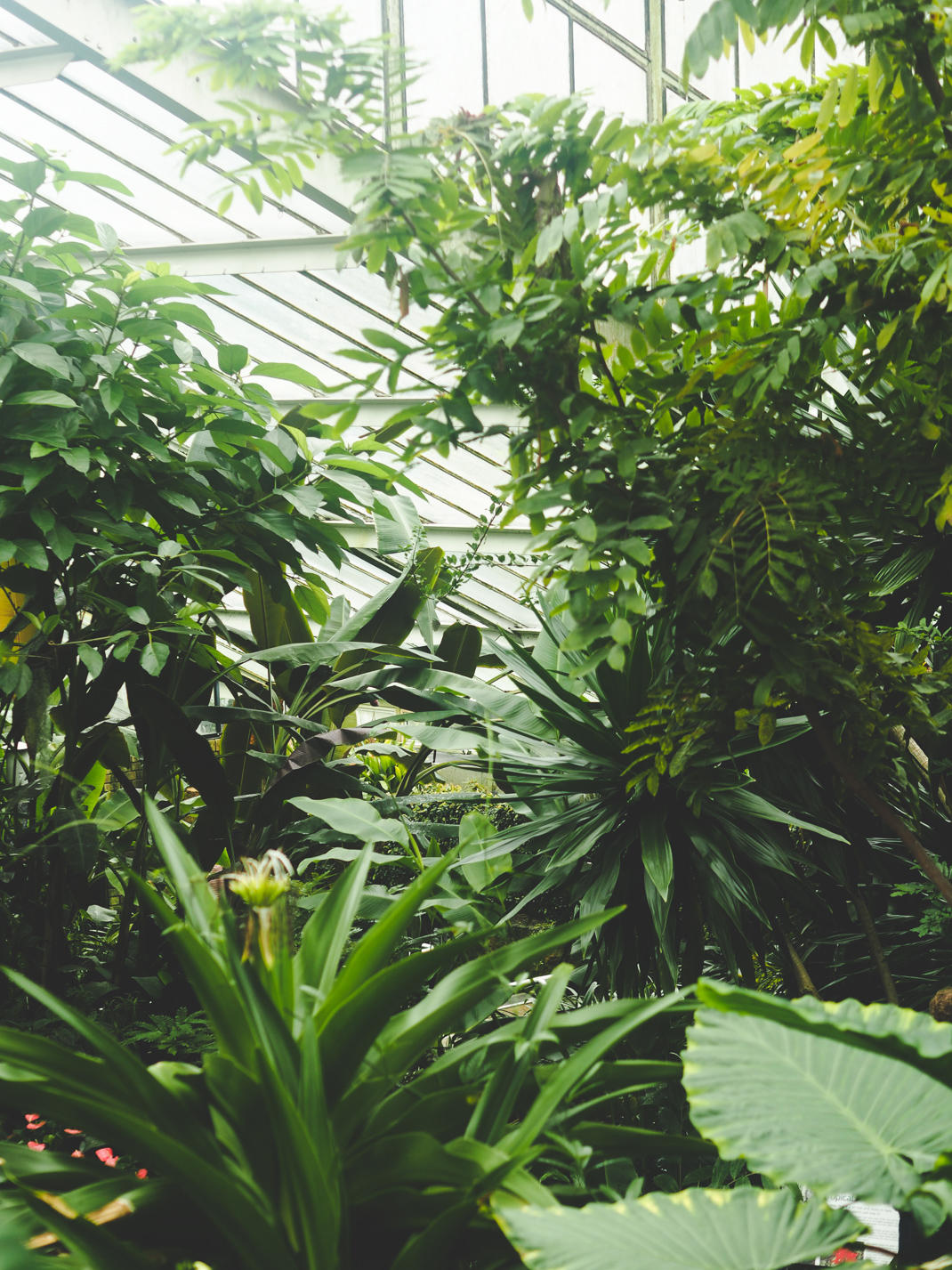 kew gardens tropical greenhouse
