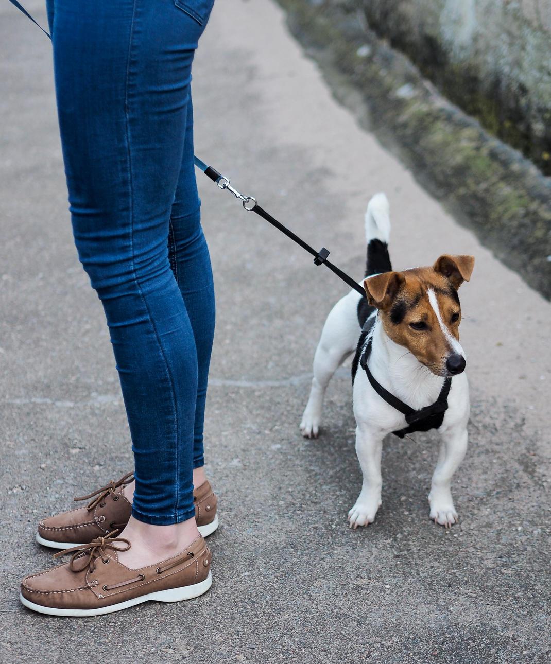 cruz the dog - natbeesfashion
